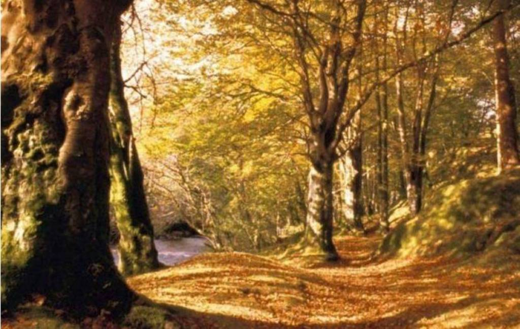 Les_arbres dans poésie